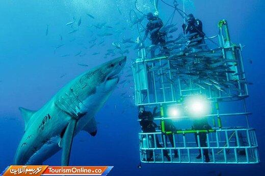 ده: غواصی در قفس با کوسهها در کیپتاون-آفریقای جنوبی-