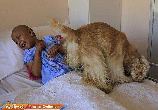 سگ های درمانگر