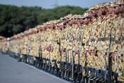 شرایط استخدام سربازان در نیروهای مسلح تشریح شد