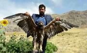 رها سازی ۵ بال کبک و یک بهله عقاب طلایی  در دلفان