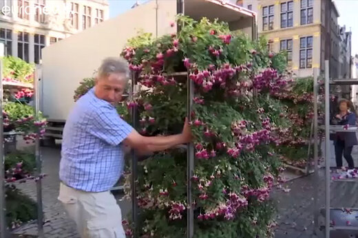 فیلم | ۳۰ گروه بینالمللی پروشدهنده گل و گیاه بروکسل را گلآرایی کردند