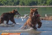 تصاویر | شبهجزیره کامچاتکا؛ میعادگاه خرسهای قهوهای و سالمون قرمز!