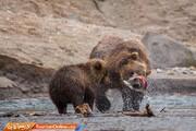 ماجرای کشف لاشه دو توله خرس ماده در زبالهدانی چه بود؟