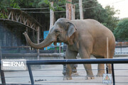 تصاویر | از شیر و ببر تا فیل و ایگوانا در باغ وحش ارم
