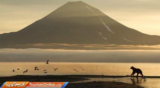 شبهجزیره کامچاتکا؛ میعادگاه خرسهای قهوهای و سالمون قرمز