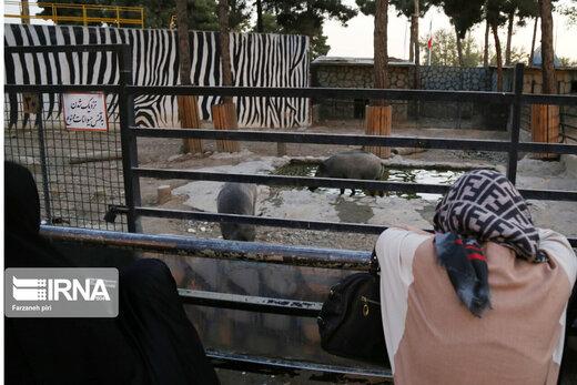 بازدید از باغ وحش ارم تهران