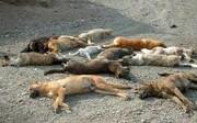 دستگیری تعدادی از معترضان به کشتار سگها در تهران