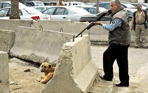 کشتار سگها با آمپول اسید از سوی عضو شورای شهر تهران تایید شد