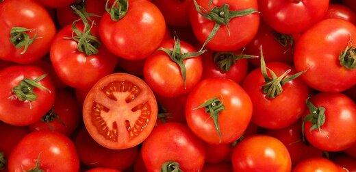گوجهفرنگی در البرز کمیاب شد