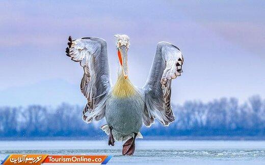 عکس برتر مسابقه عکاس ۲۰۱۹ پرندگان