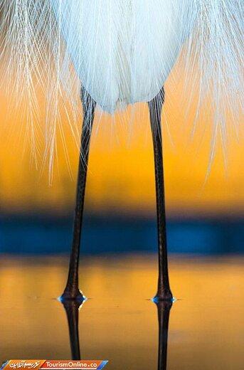 عکس منتخب مسابقه عکاس ۲۰۱۹ پرندگان