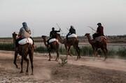 تصاویر | ماراتن شتر سواری در خوزستان