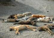 پرونده| ماجراهای کشدار «سگکشی» در پایتخت