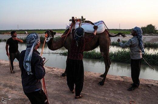 نخستین دوره مسابقات شتر سواری در روستای شیخ زهراب از توابع شهرستان حمیدیه