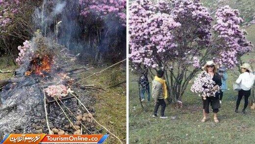 جداکردن و آتش زدن شاخههای درخت برای درست کردن باربکیو!