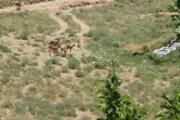 فیلم | شکار لحظهها در حیات وحش سمنان