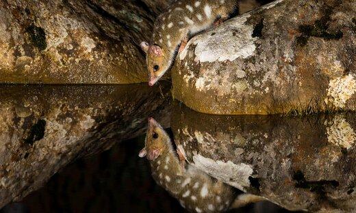 عکس برنده مسابقه عکاسی طبیعت جئوگرافیک 2019 استرالیا