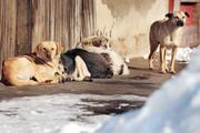جریمه سنگین، حبس قطعی و کار اجباری/ پیشنهاد کاربران خبرآنلاین برای مقابله با حیوانآزاری