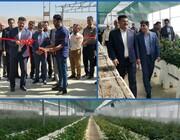 افتتاح گلخانه هیدروپونیک گل رز در خرم آباد / سرمایه گذاری 4 میلیارد تومانی