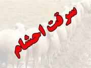 سارق احشام در دورود دستگیر شد/ کشف ۶۳ راس گوسفند