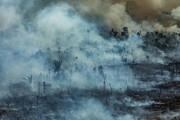 زمین در بحران آتشسوزی؛ از آمازون تا ارسباران