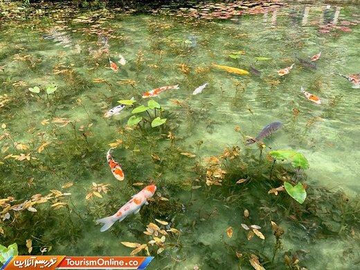 حوضچه مونه ژاپن