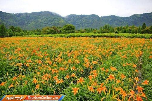 دشت گلهای سوسن-نانتو ، تایوان-