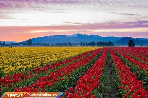 دشت لاله – اسکاگیت، آمریکا-