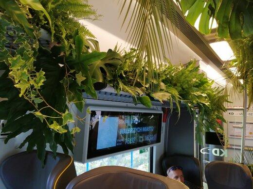 قطاری با پوشش گیاهی در لهستان