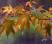 وضعیت بارش باران در مهر و آبان ۹۸ چطور خواهد بود؟