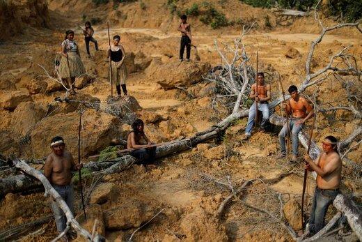قطع درخت توسط بومیان قبیله مورا در جنگلهای آمازون واقع در نزدیکی ایالت آمازوناس برزیل