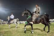 تصاویر | جشنواره زیبایی اسب در کرمانشاه
