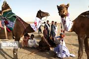تصاویر | فستیوال شتر دوانی در زاهدان