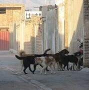 گام بلند جمعیت کردستان سبز برای حمایت از حیوانات