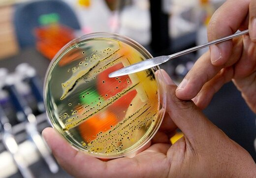 نقش میکروبها در شروع حمله قلبی