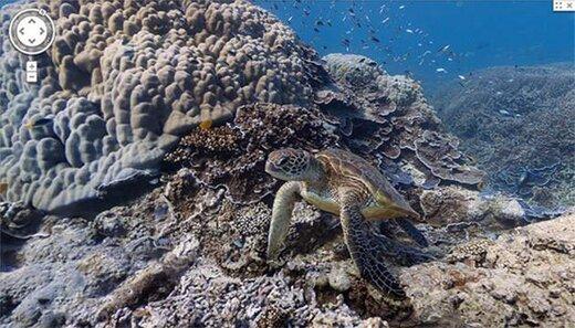 تماشای ماهیهای زیر دریا با گوگل