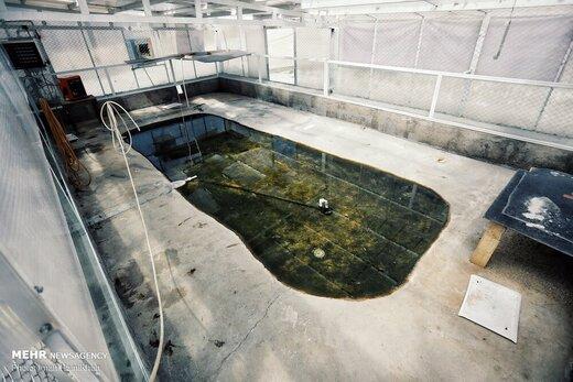 مزرعه پرورش کروکدیل و ماهی در ملایر