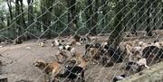 مکان خرید و فروش حیوانات در کدام خیابان تهران است؟