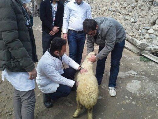 فعالیت تیم های نظارتی دامپزشکی در البرز آغاز شد