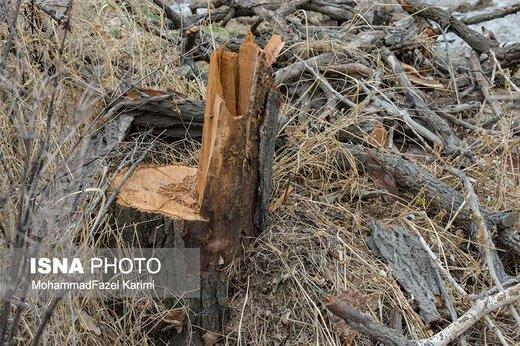 ماجرای قطع درختان خیابان الهیه و بازداشت عامل آن، چه بود؟