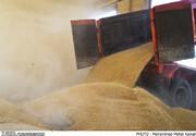 انتقال ۸۰ هزار تن گندم از بندرامام به سایر بنادر کشور
