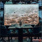 صرف یک بشقاب غذا در اعماق دریا! +تصاویر