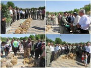 صدا شکستن قفس های اسارت پرندگان در شهرستان دیواندره طنین انداز شد