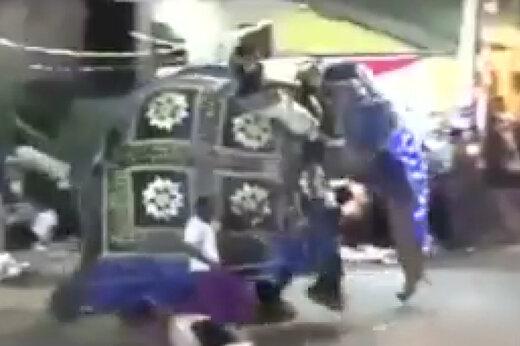 فیلم | فیل وحشی 18 نفر را زخمی کرد