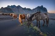 عکس | چرای اسبهای وحشی در عکس روز نشنال جئوگرافیک