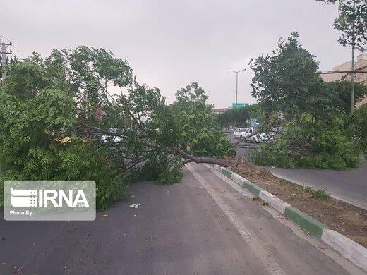 شهرداری تهران: قطع کنندگان درختان الهیه بازداشت شدند