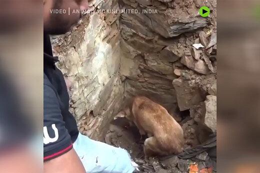 ویدئوی شگفتانگیز از تلاش یک سگ برای نجات نوزادانش از زیر آوار