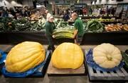 تصاویر | بزرگترین میوه و سبزیجاتی که در عمرتان دیدید!
