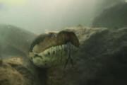 فیلم | رویارویی غواصان با مار ۷ متری ۹۰ کیلویی