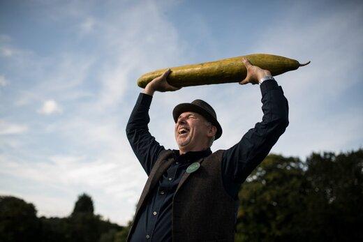 نمایشگاه سبزیجات غول پیکر در یورکشایر